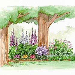 Dear Resistant Shade Garden