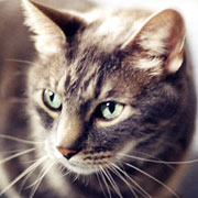Merlin the Cat