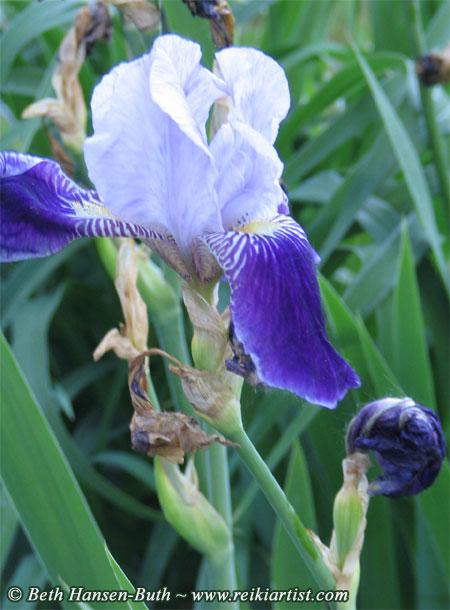 iris fade out